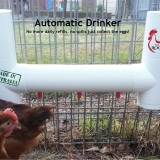 Automatic Chicken Drinker with 3 Drinking Points