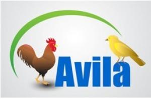 Avila Limited