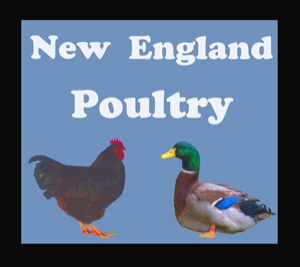 NewEnglandPoultry
