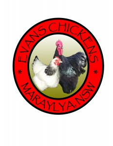 Evans Chickens