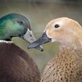 Quackpots