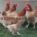 Riverview Park Poultry