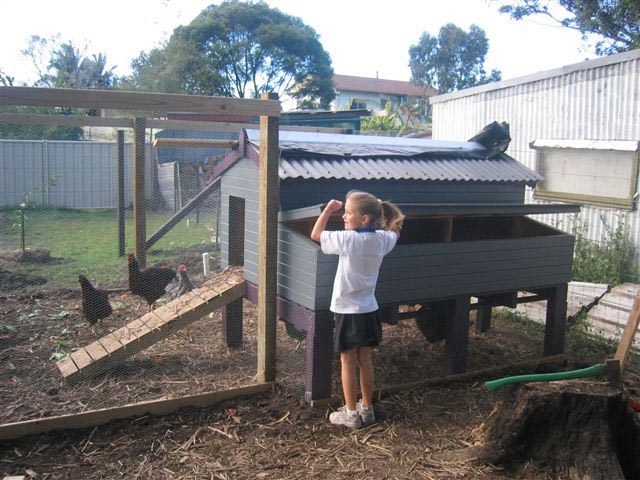 Backyard Poultry Information Centre Australia - Backyard poultry information centre australia