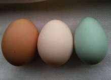 Araucana egg colour.jpg